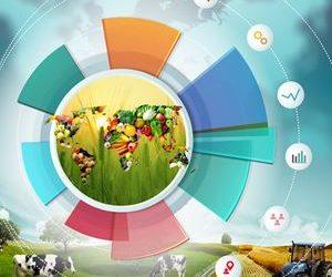 Ulusal/Uluslararası Pazarlama Stratejileri Geliştirilmesi, Projelendirilmesi, Yönetimi
